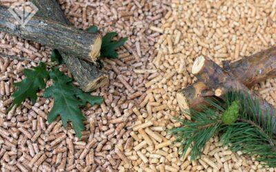 Jaki pellet drzewny wybrać – liściasty czy iglasty?